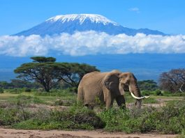 Where is Amboseli National Park