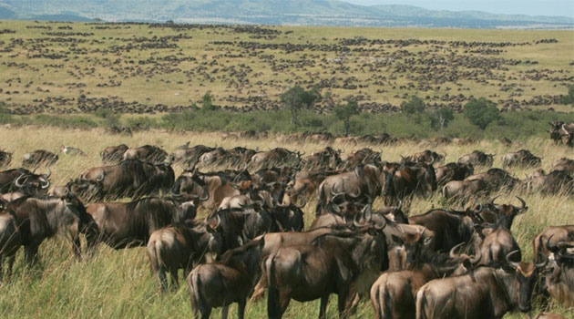 Where is Maasai Mara National Reserve