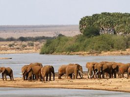 Where is Tsavo National Parks