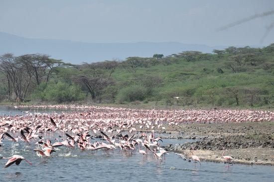 Where is Lake Bogoria